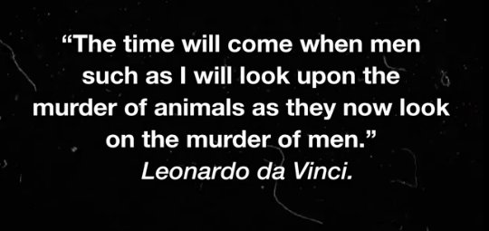 Leonardo da Vinci - The time will come when men such as I will look upon the murder of animals as they now look on the murder of men.