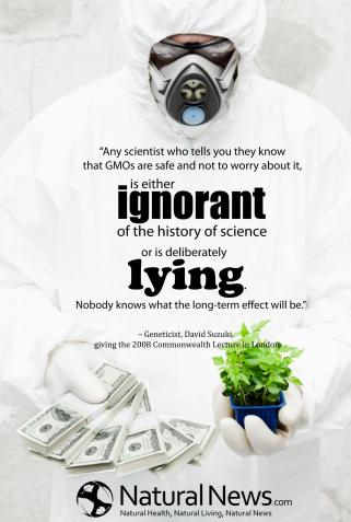 David Suzuki - Any scientist who tells you they know that GMOs are safe and not to worry about it, is either ignorant of the history of science or is deliberately lying. Nobody knows what the long-term effect will be.